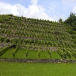 Valtellina vineyards