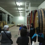 Possible guided visit to a local winery
