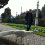 Palazzo Borromeo the peacocks